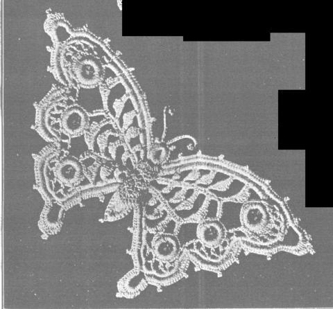 爱尔兰蝴蝶图解大全(72)