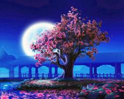 С деревом Сакура в Японии связано очень много, оно воспето в японских стихах и песнях и по праву считается одним из...