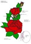 【引用】玫瑰…不同的…和图纸… - 枫林傲然 -