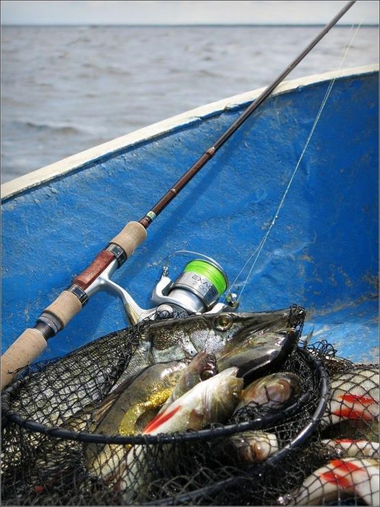 рыболовных шнуров mystic