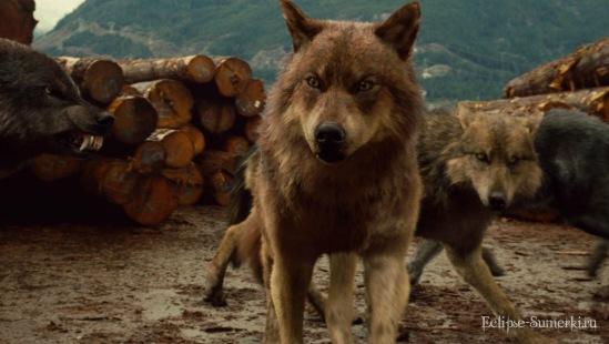 Фото волков из фильма сумерки